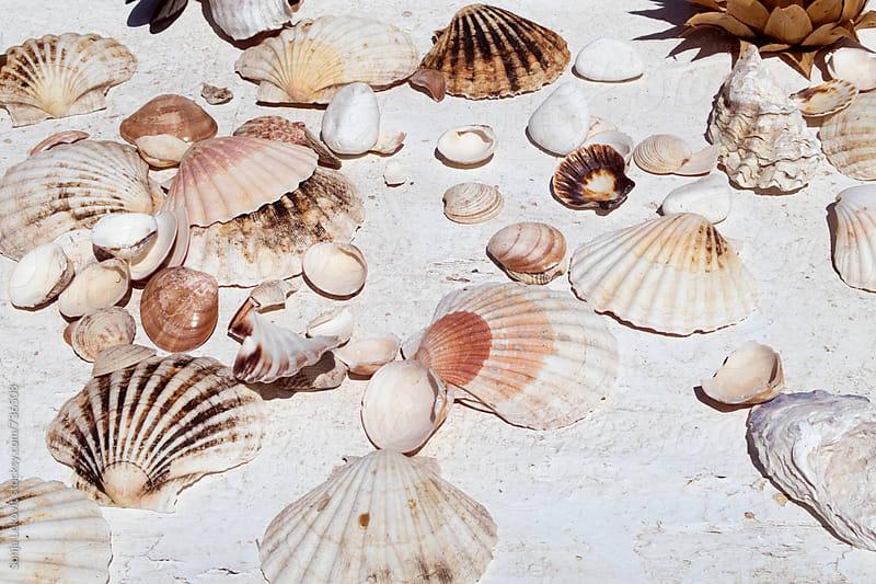 various seashells on white background by Sonja Lekovic for Stocksy United