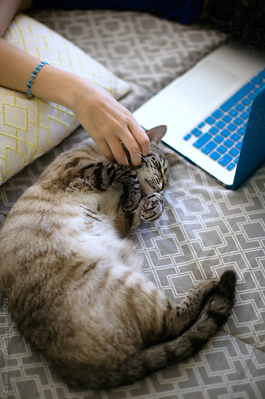 Teenage girl on her laptop with her siamese cat next to her on the bed by Carolyn Lagattuta for Stocksy United
