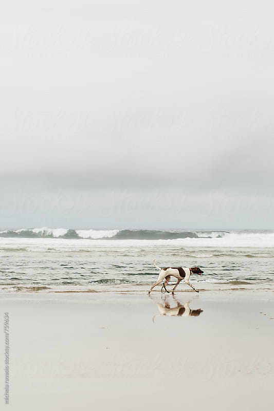 A dog walking alone on the beach by michela ravasio for Stocksy United