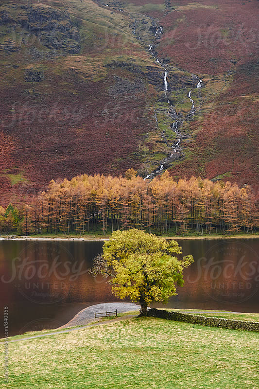 Lone tree in autumn. Buttermere, Cumbria, UK. by Liam Grant for Stocksy United