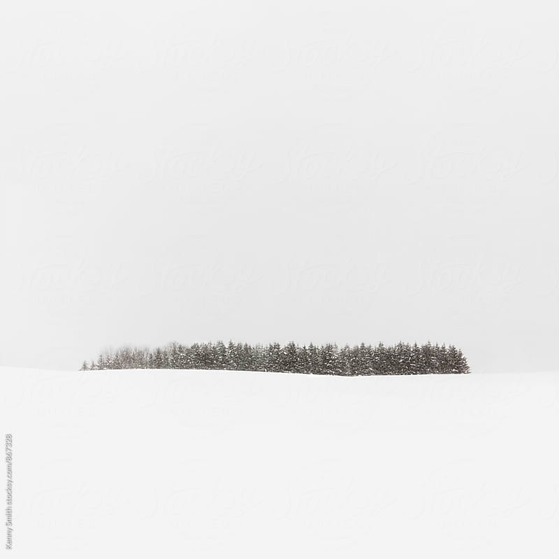 Snow Forest - Wide by Kenny Smith for Stocksy United