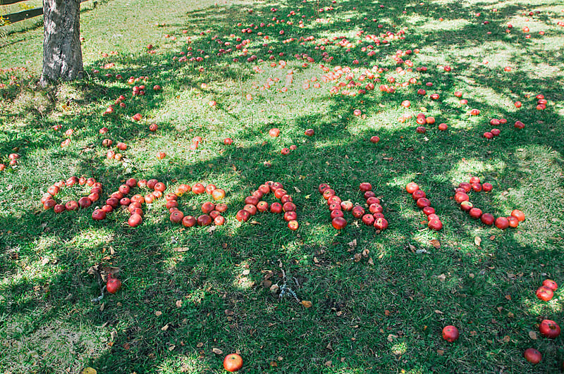Organic sign made of ripe organic apples by Jovo Jovanovic for Stocksy United