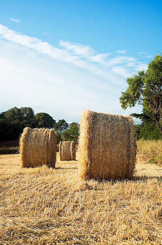 Straw bales on a golden field and cloudy sky, Spain by Bisual Studio for Stocksy United