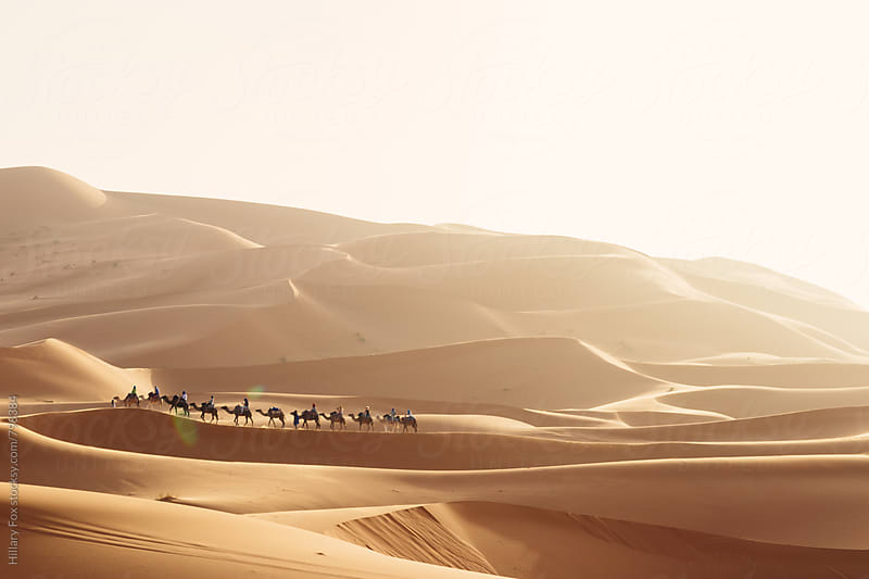 Sahara Trek by Hillary Fox for Stocksy United