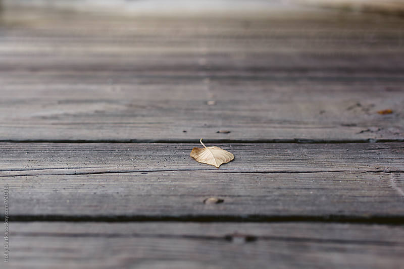 A fallen leaf on a wooden background. by Holly Clark for Stocksy United