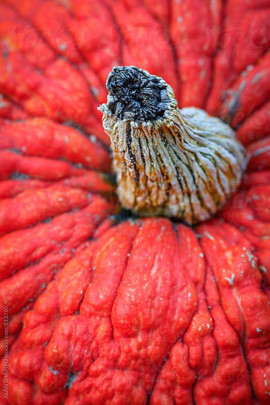 Pumpkin by alan shapiro for Stocksy United