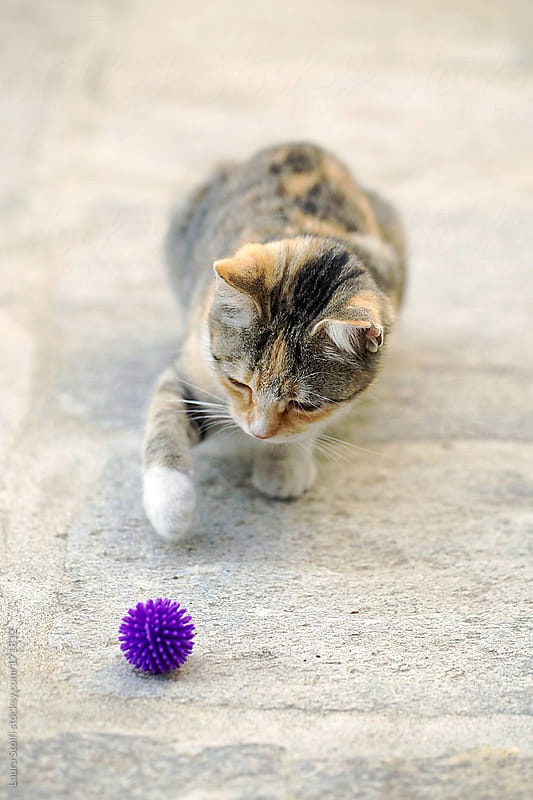 Kitty cat playing with rubber ball by Laura Stolfi for Stocksy United
