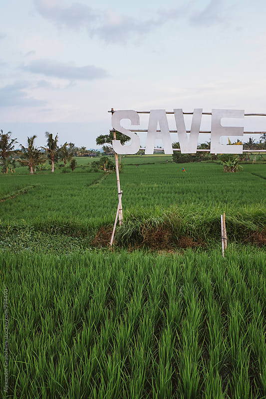 Save Nature Text In Rice Field by Alexander Grabchilev for Stocksy United