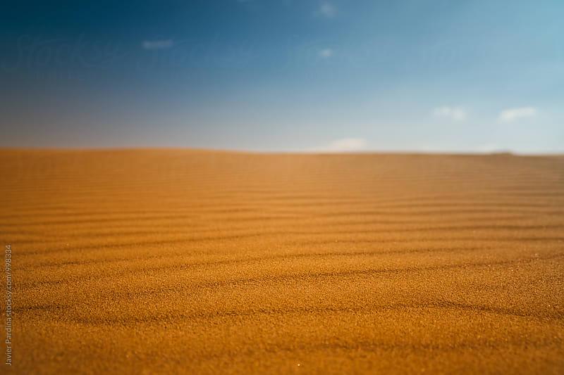 Details of a desert landscape by Javier Pardina for Stocksy United