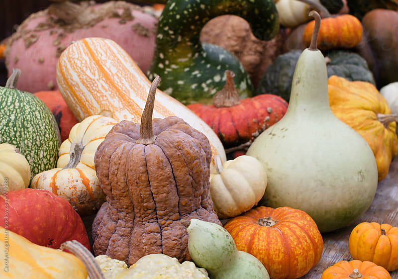 Assortment of gourds for fall decorations by Carolyn Lagattuta for Stocksy United