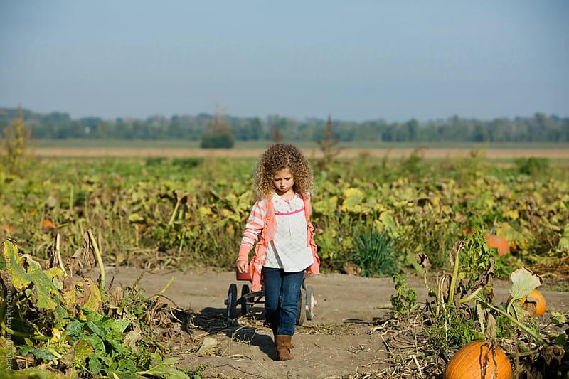 Pumpkins: Alone Girl Pulling Wagon Looking For Pumpkins by Sean Locke for Stocksy United