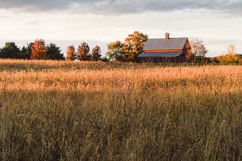 red barn or stable in a field of dry grass in autumn by Deirdre Malfatto for Stocksy United
