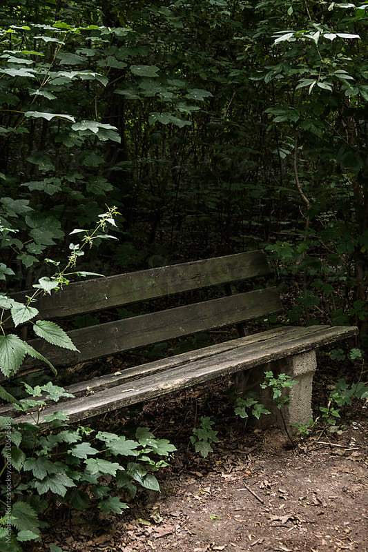 Empty old bench in a forest by Melanie Kintz for Stocksy United
