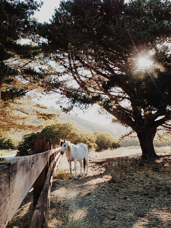 Lone Horse Stands by Fence by Eric Bowley for Stocksy United