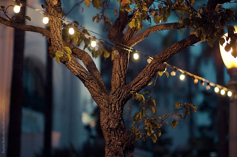 A tree in the park at twilight with lights and lamp by Rachel Bellinsky for Stocksy United
