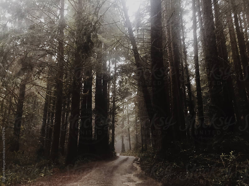 A Foggy Forest Drive by Sidney Morgan for Stocksy United