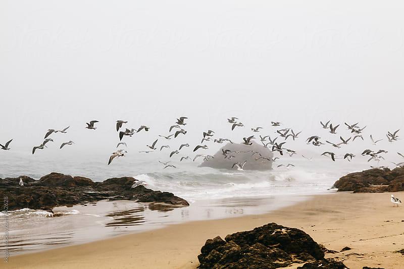Flock of gulls flying over misty beach by kkgas for Stocksy United