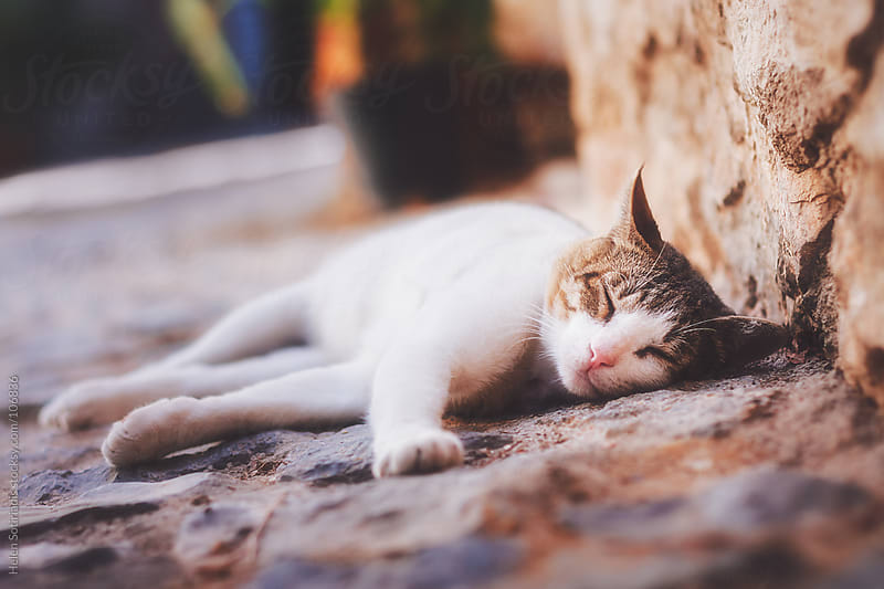 Cat Nap by Helen Sotiriadis for Stocksy United