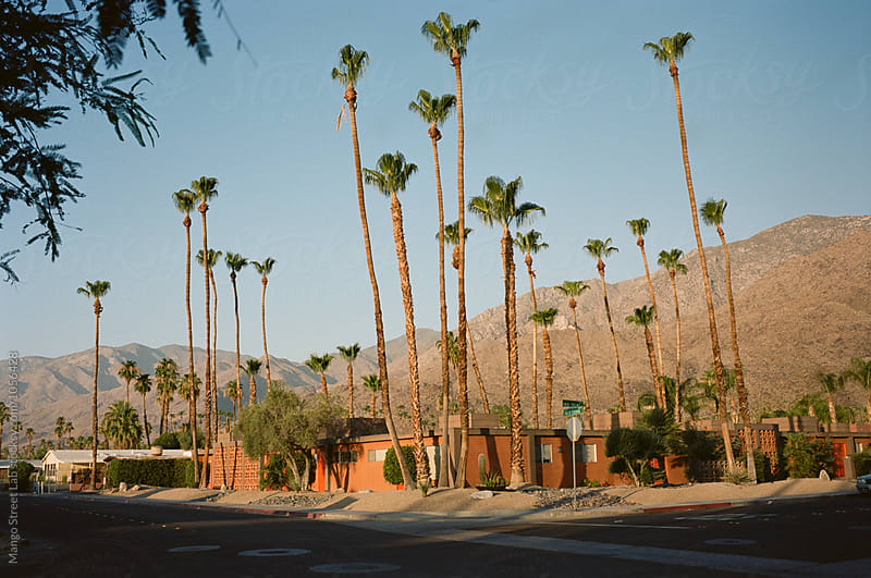 Palm Springs Desert Street with Palm Trees in the Summer by Rachel Gulotta Photography for Stocksy United