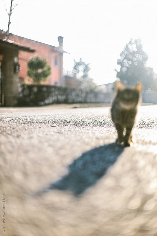 Cute Cat by Good Vibrations Images for Stocksy United