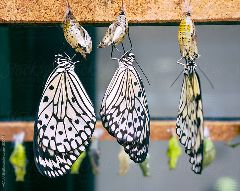 Butterflies newborn by ACALU Studio for Stocksy United