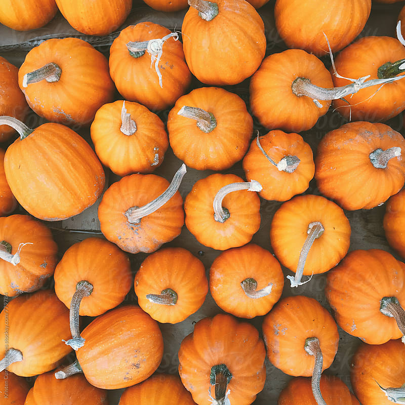 Group of mini pumpkins  by Kristen Curette Hines for Stocksy United