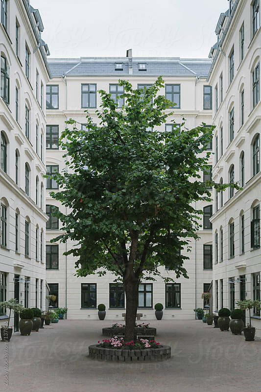 Tree in urban environment by Zocky for Stocksy United