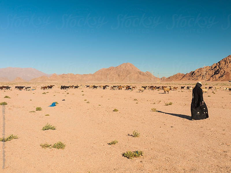 Goat hearder in the Egyptian dessert by Photographer Christian B for Stocksy United