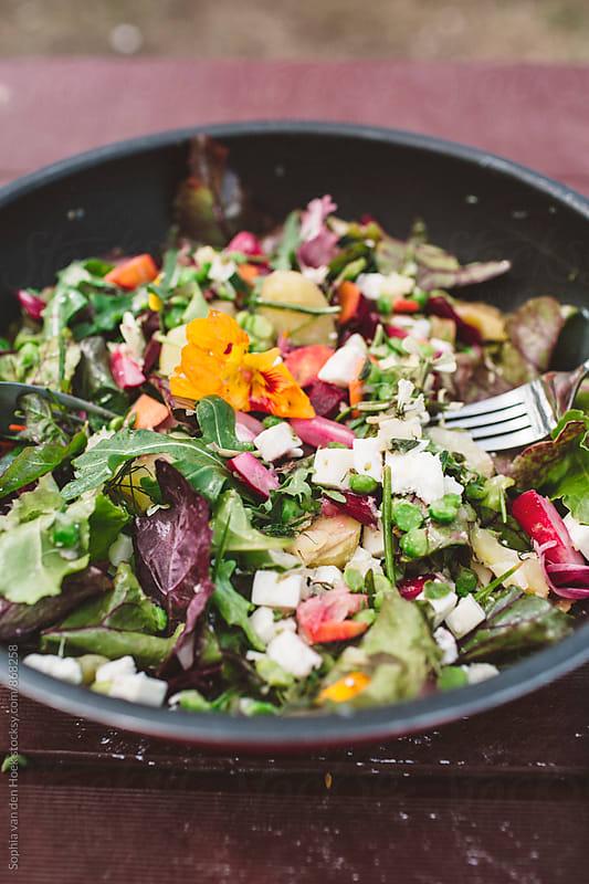 Salad by Sophia van den Hoek for Stocksy United