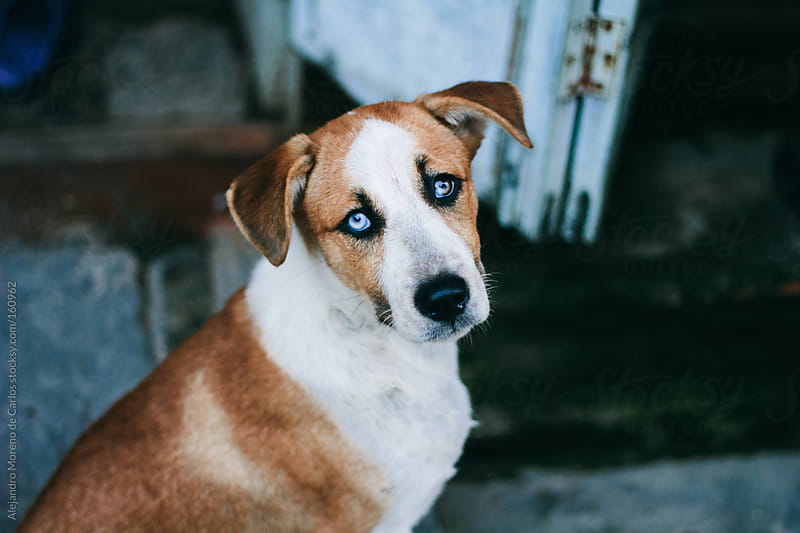 Stray dog abandoned in the street by Alejandro Moreno de Carlos for Stocksy United