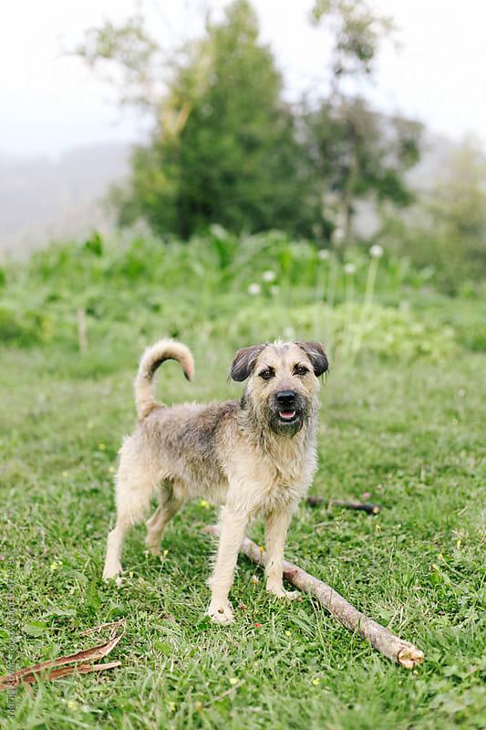 Dog outdoor by Marija Kovac for Stocksy United