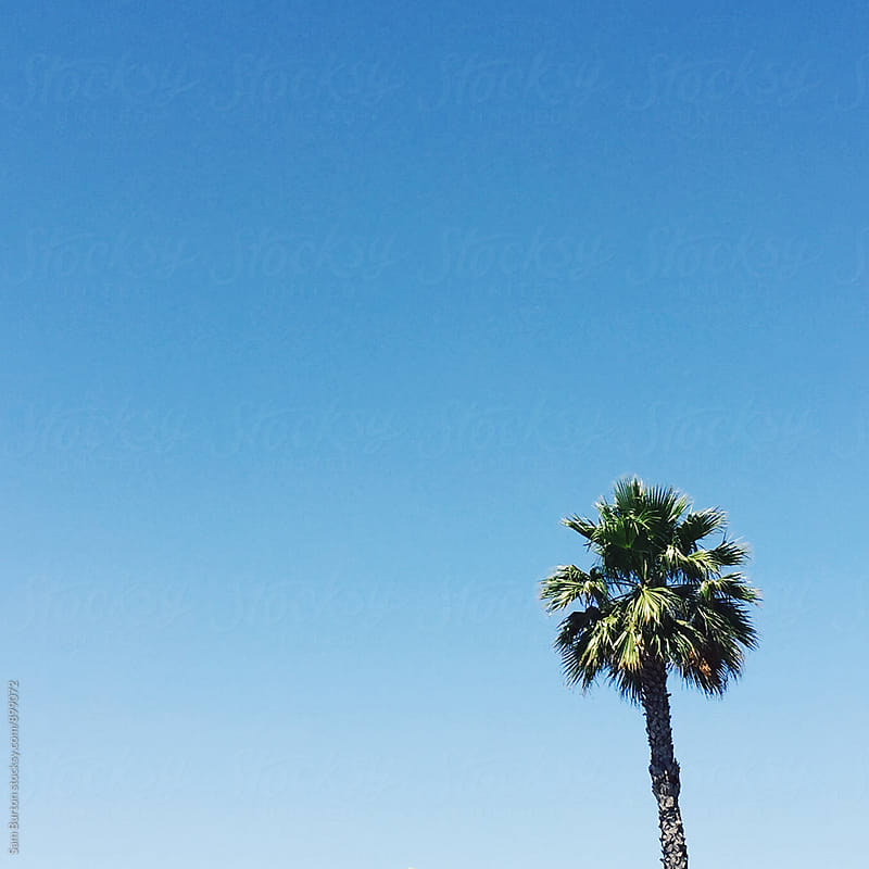 Palm Tree by Sam Burton for Stocksy United