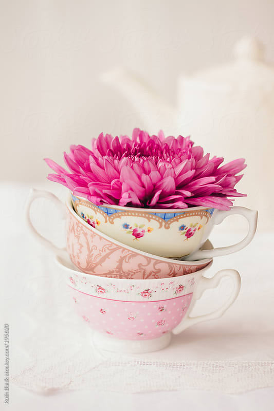 Single chrysanthemum in a stack of teacups by Ruth Black for Stocksy United