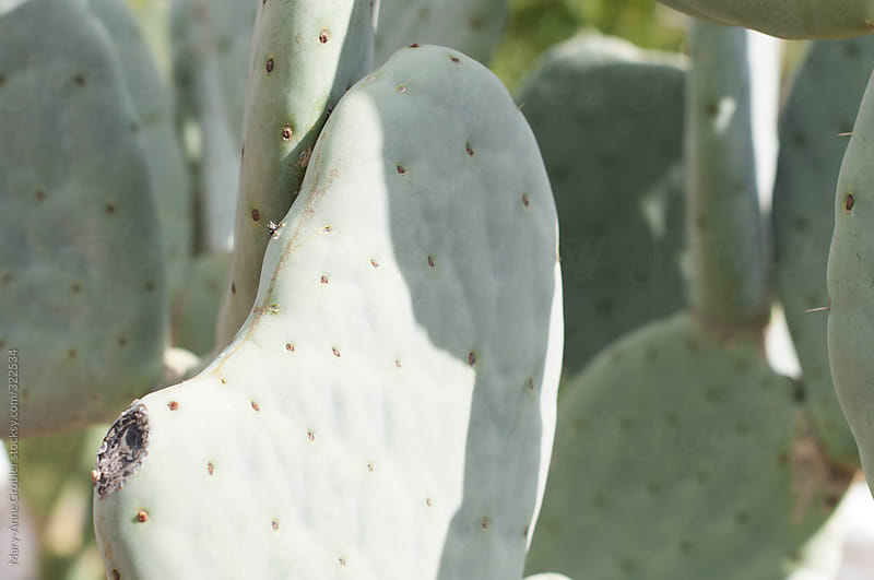 Cactus by Mary-Anne Grobler for Stocksy United