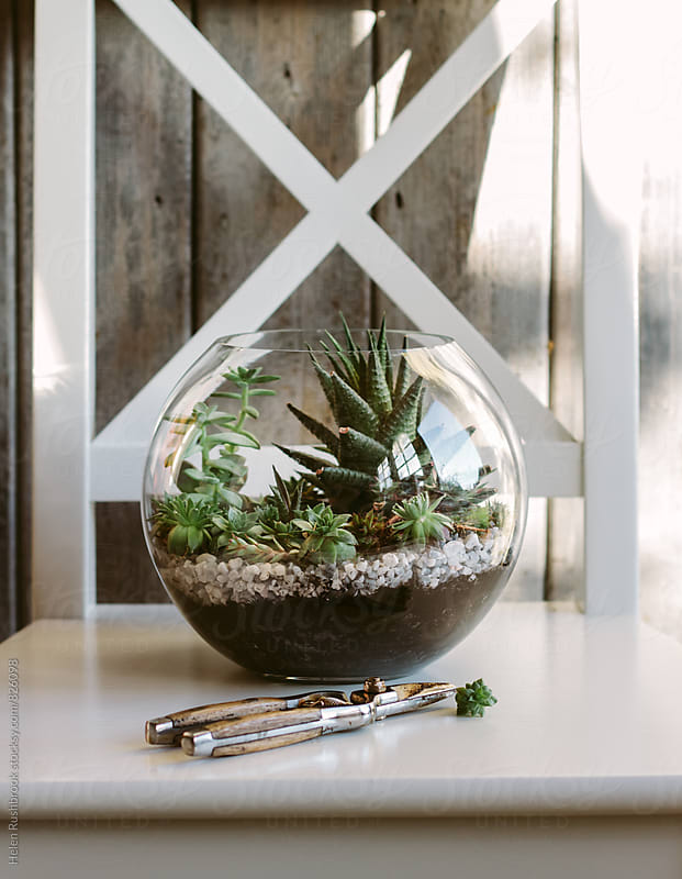 Succulents planted in a terrarium by Helen Rushbrook for Stocksy United
