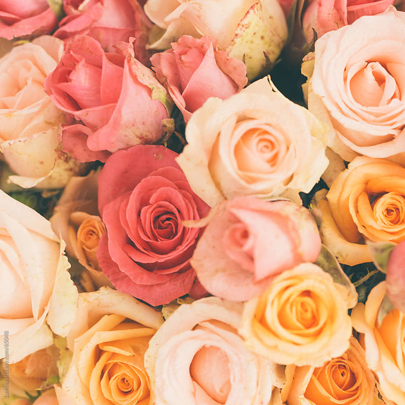 Pink and Orange Roses by Lumina for Stocksy United