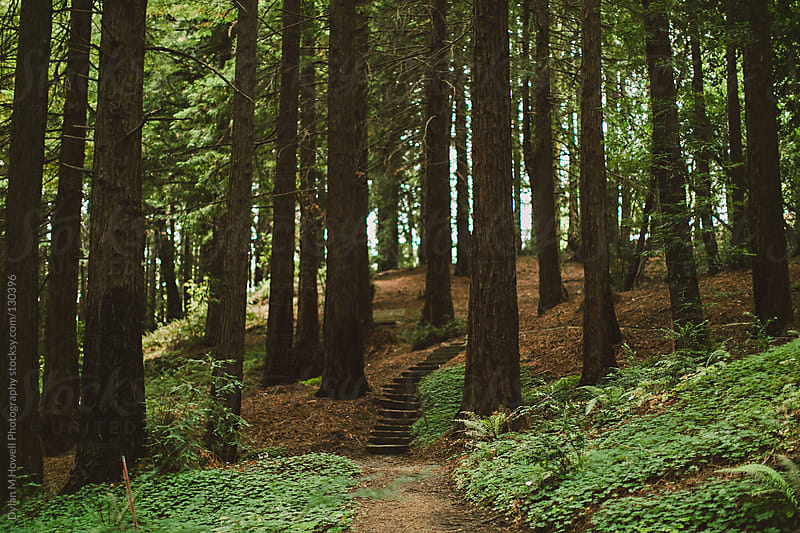Path in forest by Dylan M Howell Photography for Stocksy United