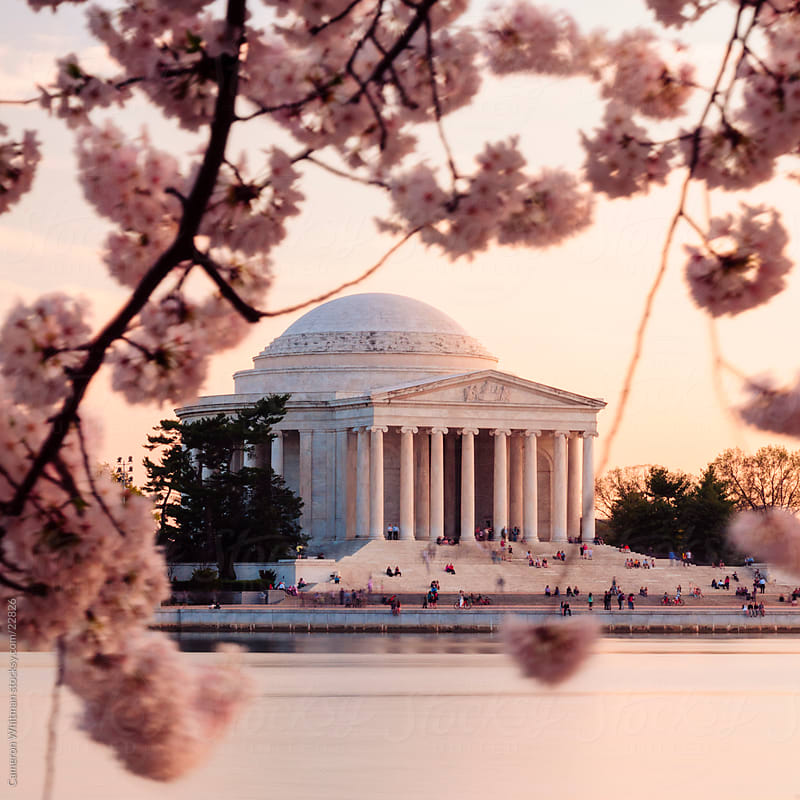 Cherry Blossoms and the Jefferson Memorial by Cameron Whitman for Stocksy United