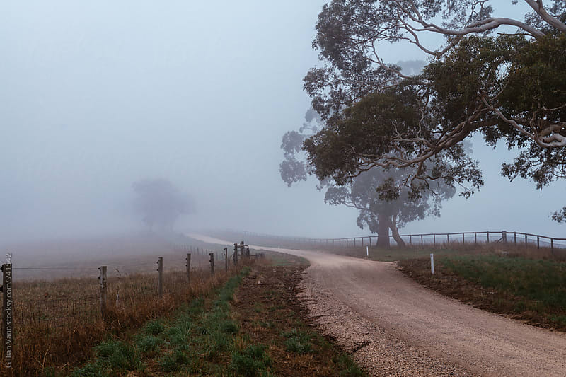 foggy morning on a country road by Gillian Vann for Stocksy United