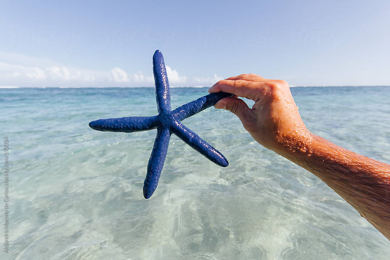Hand holding blue starfish on a beach of a tropical island by Alejandro Moreno de Carlos for Stocksy United