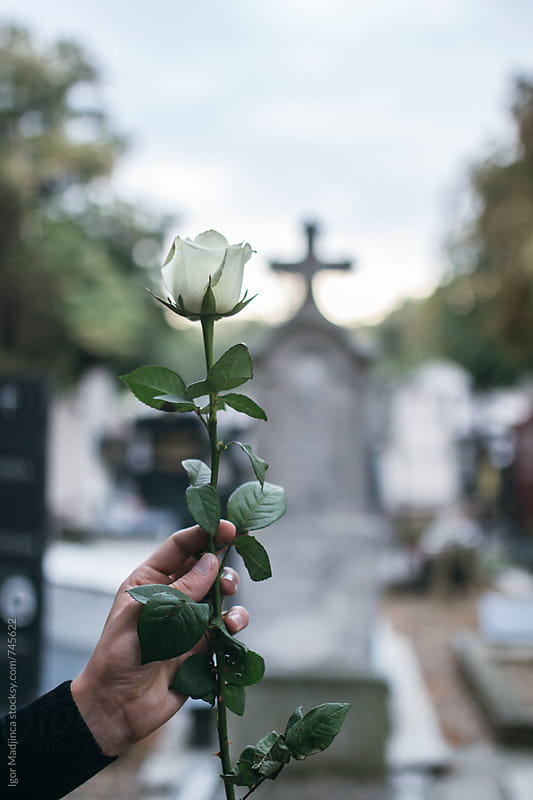 person holding  a white rose in front of the grave on cemetery by Igor Madjinca for Stocksy United