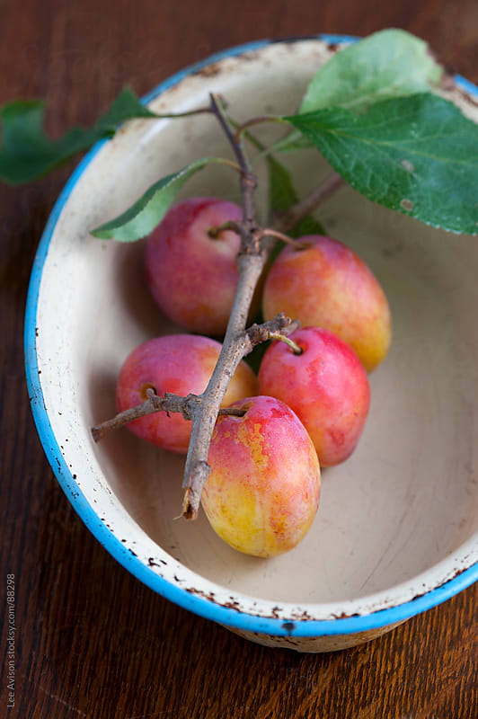 harvested fresh plums in a vintage enamelled dish by Lee Avison for Stocksy United