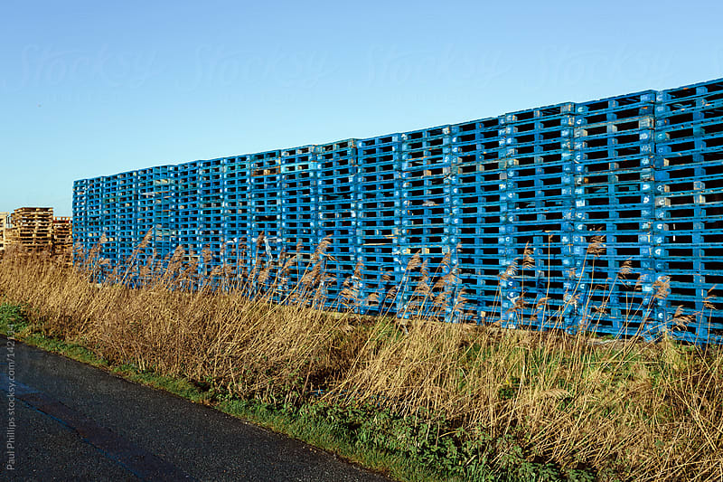 Stacks of blue wooden pallets by tall grass by Paul Phillips for Stocksy United