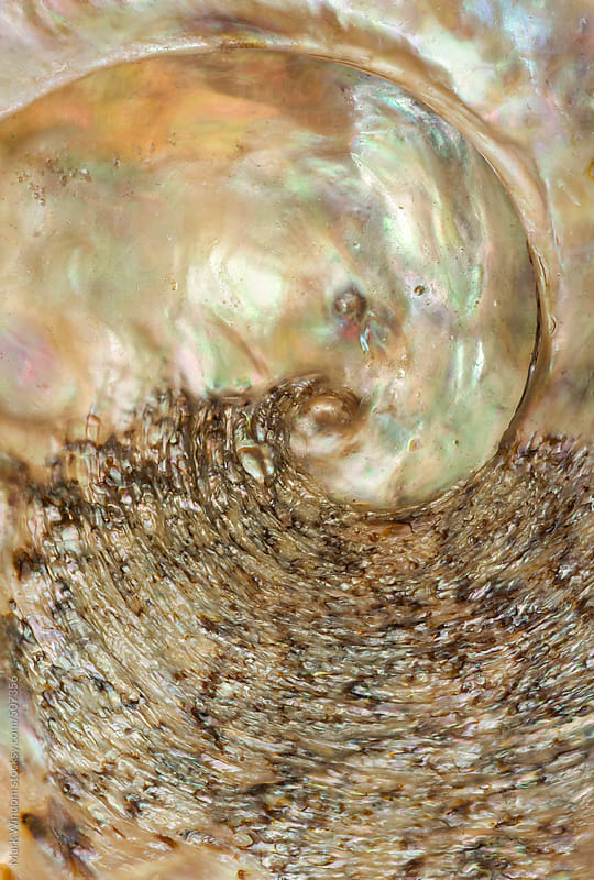 Red Wave abalone shell inner surface, closeup by Mark Windom for Stocksy United