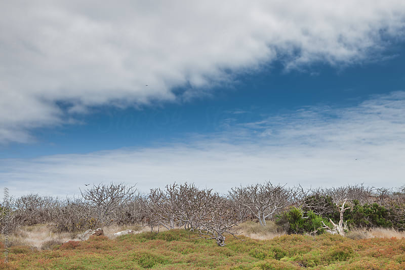 Scenic tundra of one of the Galapagos islands by Shelly Perry for Stocksy United