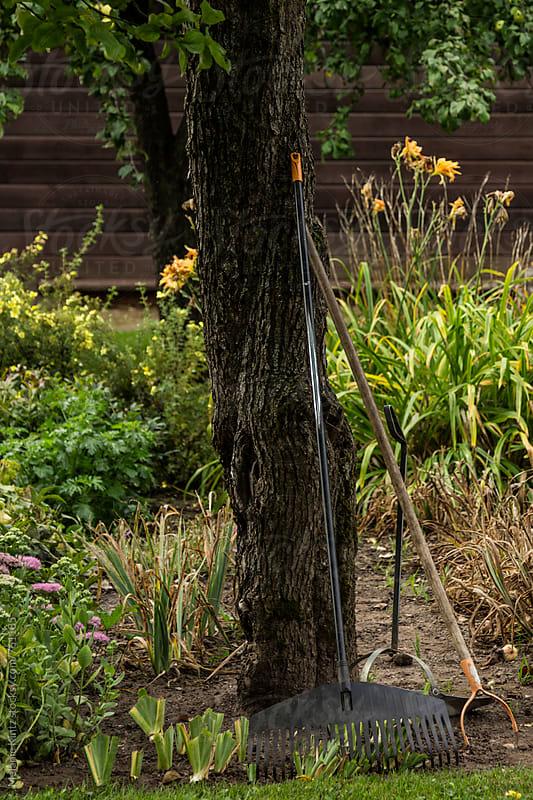Garden tools leaning against a tree trunk by Melanie Kintz for Stocksy United