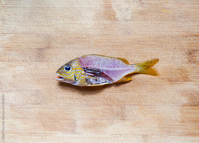 A little colourful fish on a wooden board. by Denni Van Huis for Stocksy United