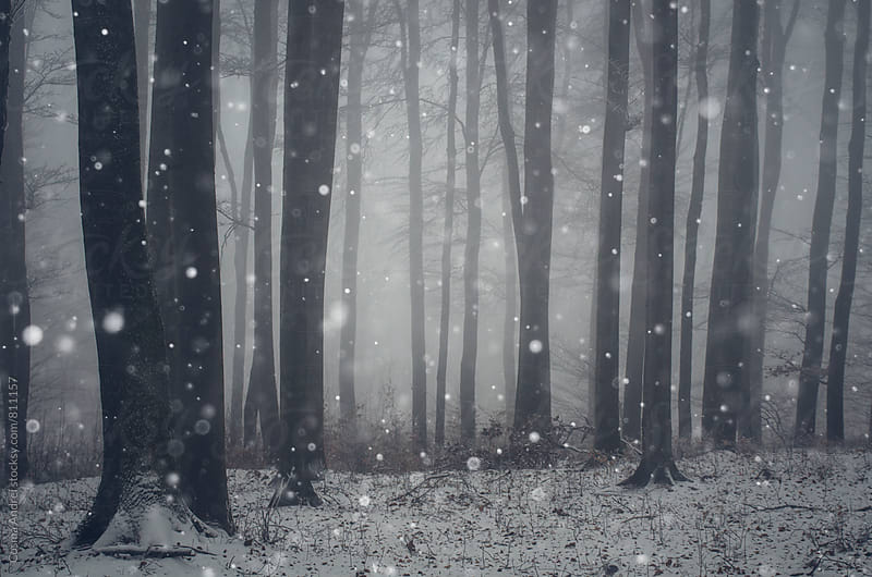 Snow on Christmas day in magical winter forest by Cosma Andrei for Stocksy United