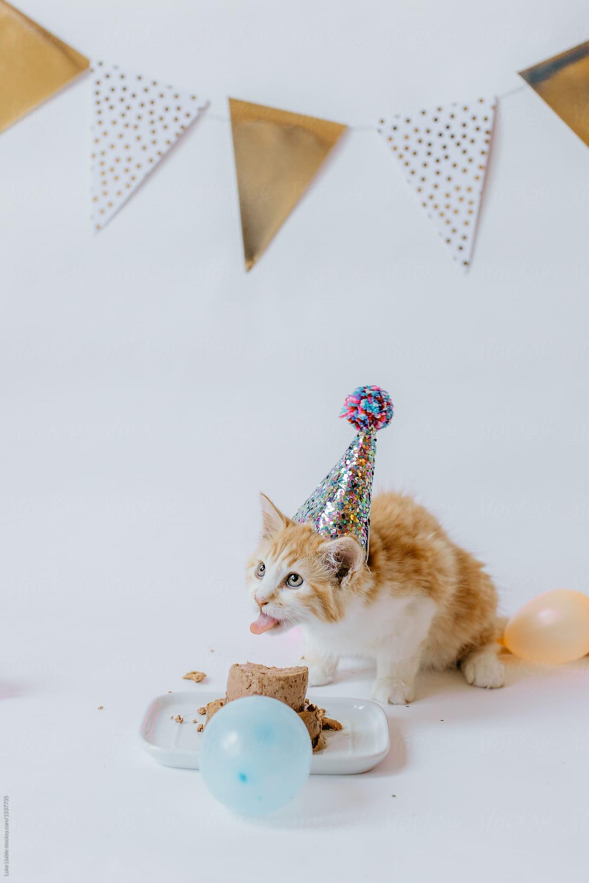 Birthday Cake For Kitten Stocksy United