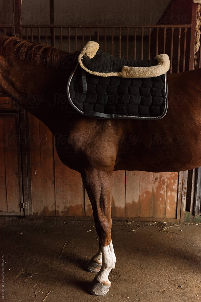 Chestnut Horse With Saddle On Back By Milles Studio Horse Stable Stocksy United